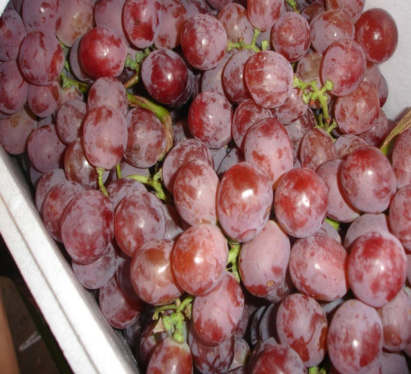 grapes-red-globe-seedless